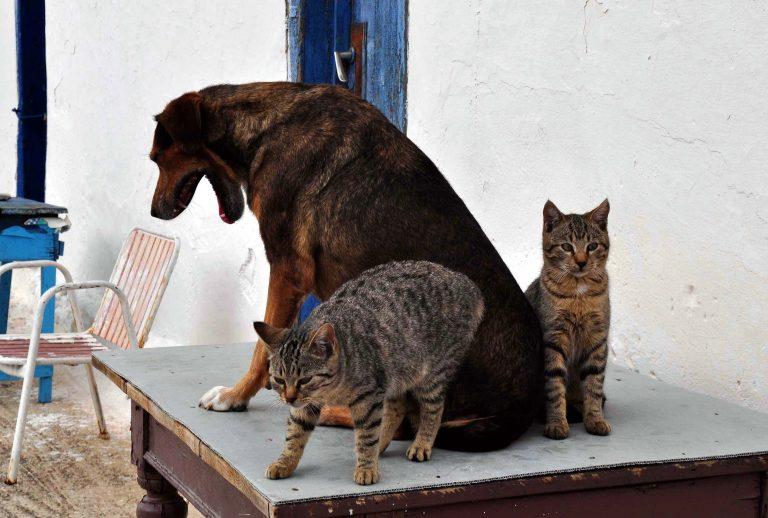 Βόλος: Ολοκληρωμένη πρόταση για τα αδέσποτα | Newsit.gr