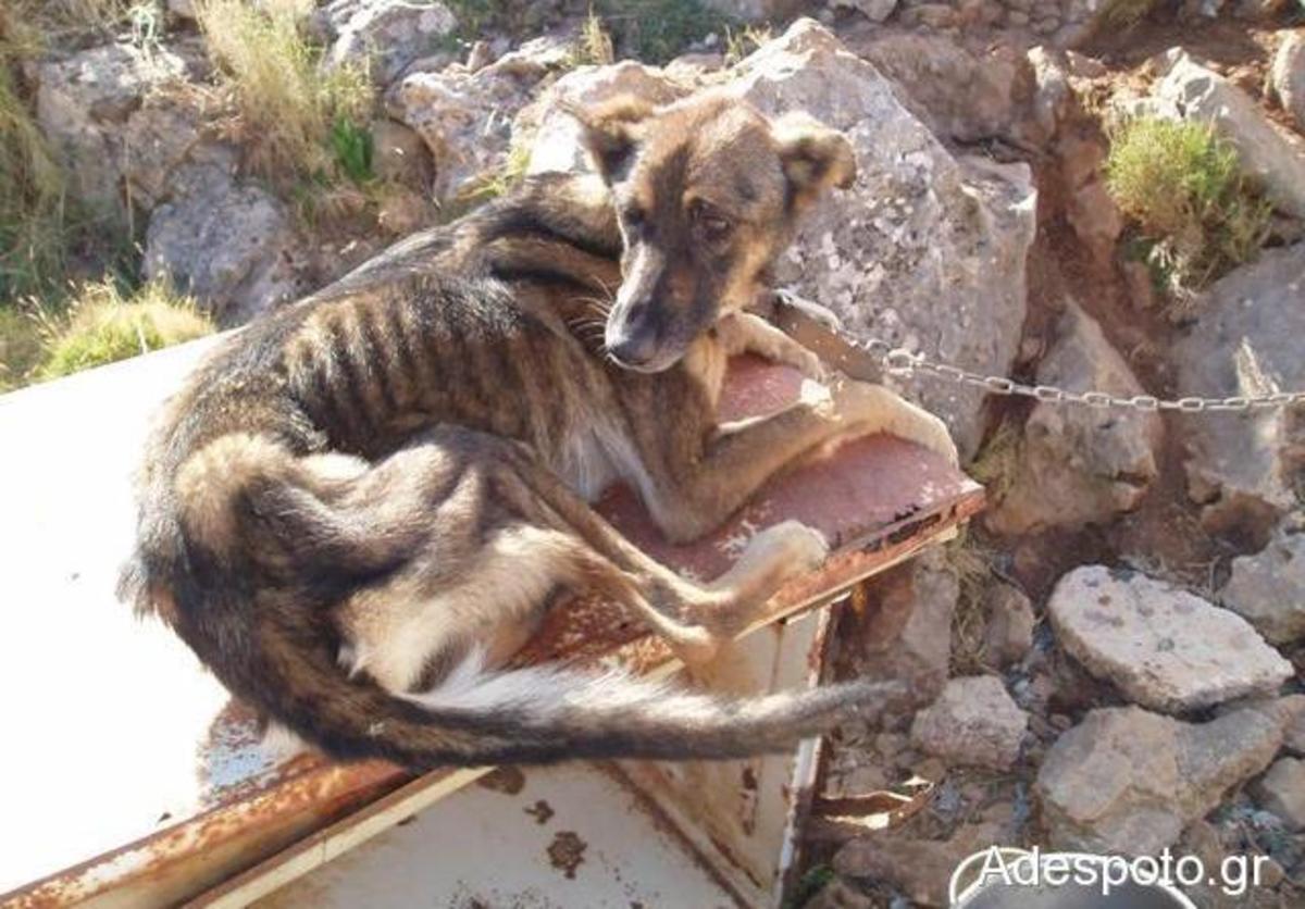 Λέρος: Στον εισαγγελέα το θέμα του κοκοποιημένου σκύλου | Newsit.gr