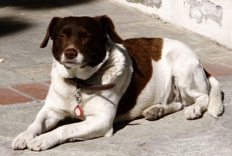 Πυροβόλησε σκύλο γιατί… του «έτρωγε τις κότες» | Newsit.gr