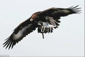 Αετοί κατά drone στη μάχη κατά της τρομοκρατίας! [vid, pics]