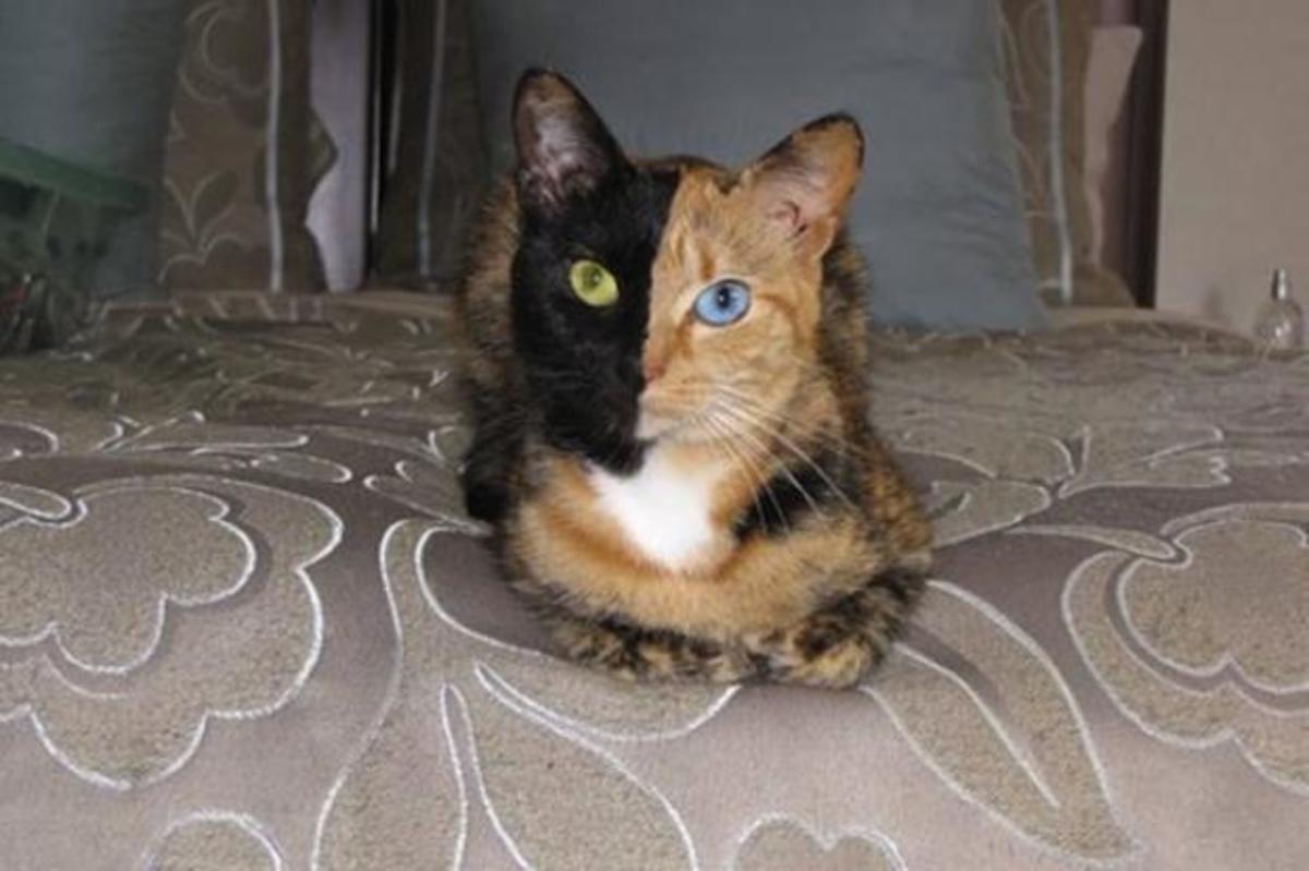 Δείτε την πιο διάσημη γάτα του κόσμου! | Newsit.gr