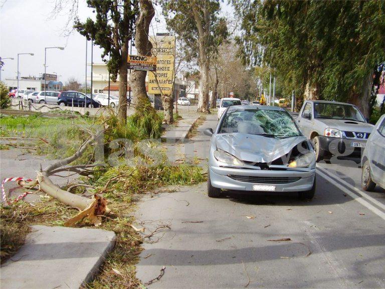 Χανιά: Του έπεσε δέντρο στο αυτοκίνητο ενώ οδηγούσε! ΦΩΤΟ | Newsit.gr