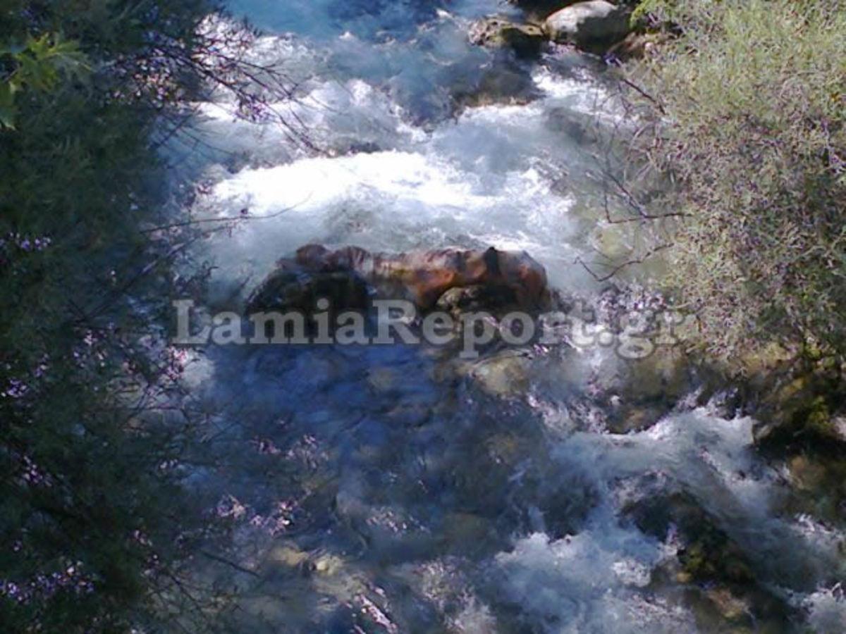 Φθιώτιδα: Ρίχνουν στον Γοργοπόταμο άρρωστα ζώα – Συγκλονιστική φωτογραφία! | Newsit.gr