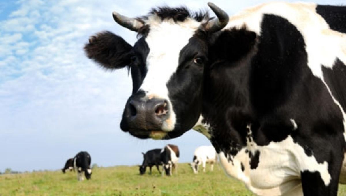 ΠΡΟΣΟΧΗ: ακόμη και το βιολογικό κρέας δεν είναι τόσο αθώο   Newsit.gr