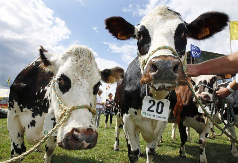 Σταματούν την πώληση βοδινού από τις ΗΠΑ! | Newsit.gr