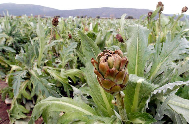 Θετική η ανταπόκριση της ΔΕΗ για την καλλιέργεια ενεργειακών φυτών | Newsit.gr