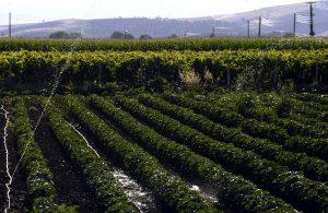 Την Τετάρτη η καταβολή 28 εκατ. ευρώ από τον ΕΛΓΑ στους αγρότες