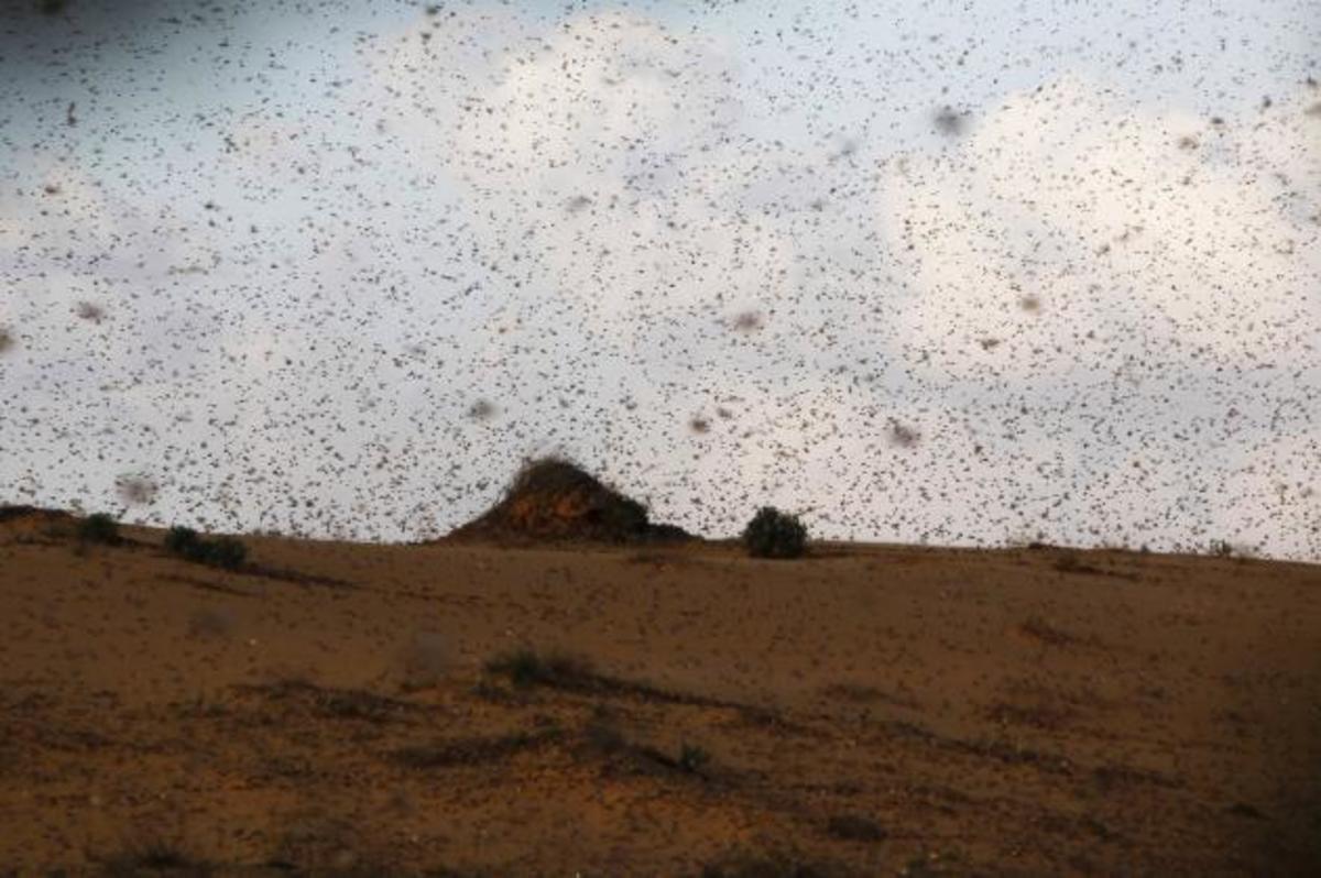 ΦΩΤΟ: Επίθεση από ακρίδες στο Ισραήλ! | Newsit.gr