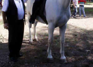 Έφιππες περιπολίες σε εθνικούς δρυμούς με θεσσαλικά άλογα προτείνει η Ενωση εκτροφέων