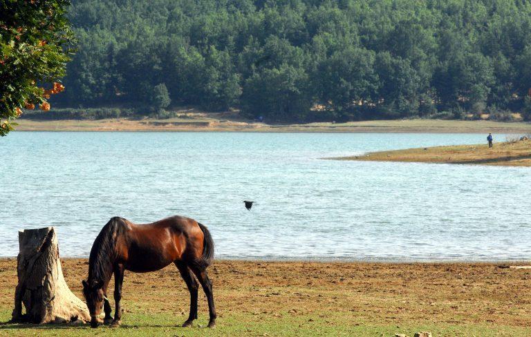 Μυστήριο με άλογα στην Πάτρα! Εμφανίζονται ξαφνικά και μετά εξαφανίζονται | Newsit.gr