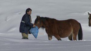 Άλογα εγκλωβίστηκαν στη χιονισμένη Πίνδο – Διάσωση από την ΕΜΑΚ [pics, vid]
