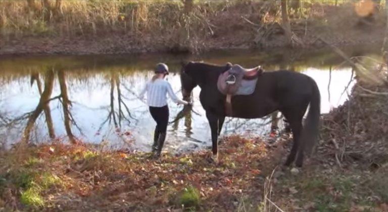 Εκπληκτικό βίντεο: Άλογο αγγίζει για πρώτη φορά το… νερό! | Newsit.gr
