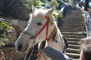 Το «προσκύνημα» του αλόγου στον Άγιο Γεώργιο στη Νεστάνη [vid]