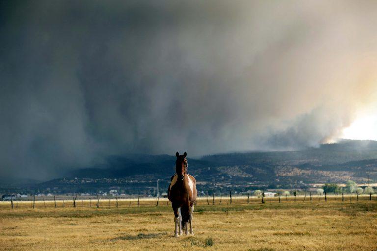 Μεσολόγγι: Τον έσυρε το άλογό του δεκάδες μέτρα | Newsit.gr