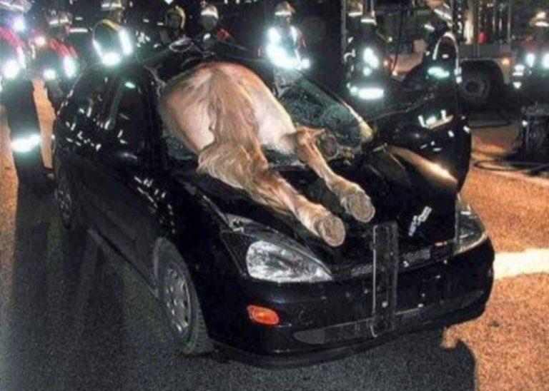 Σύγκρουση αυτοκινήτου με… άλογο στην Εύβοια! | Newsit.gr