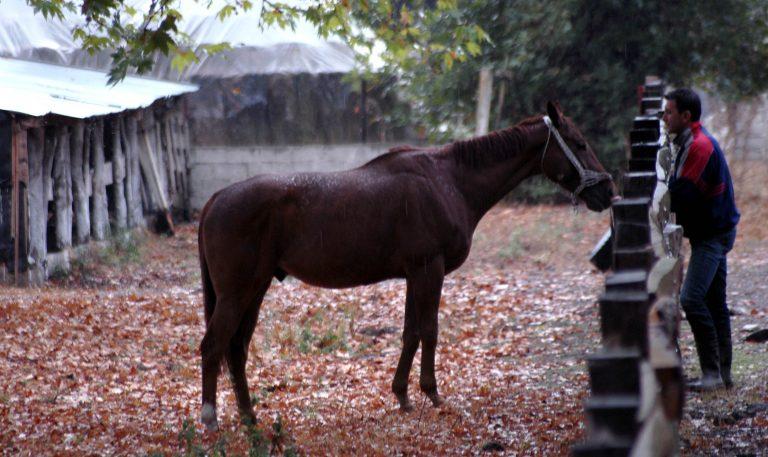 Ηλεία: Έσερνε άλογο με το αυτοκίνητό του!   Newsit.gr