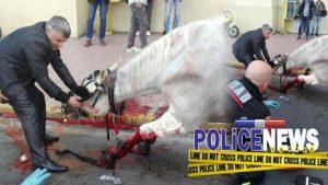 Άλογο συγκρούστηκε με ταξί στο κέντρο της Αθήνας! Αίματα παντού [pics]