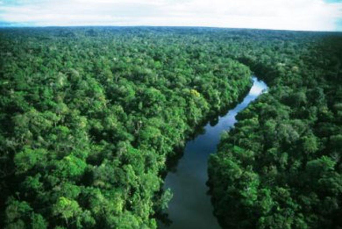 Καίγονται τα δάση του Αμαζονίου… | Newsit.gr
