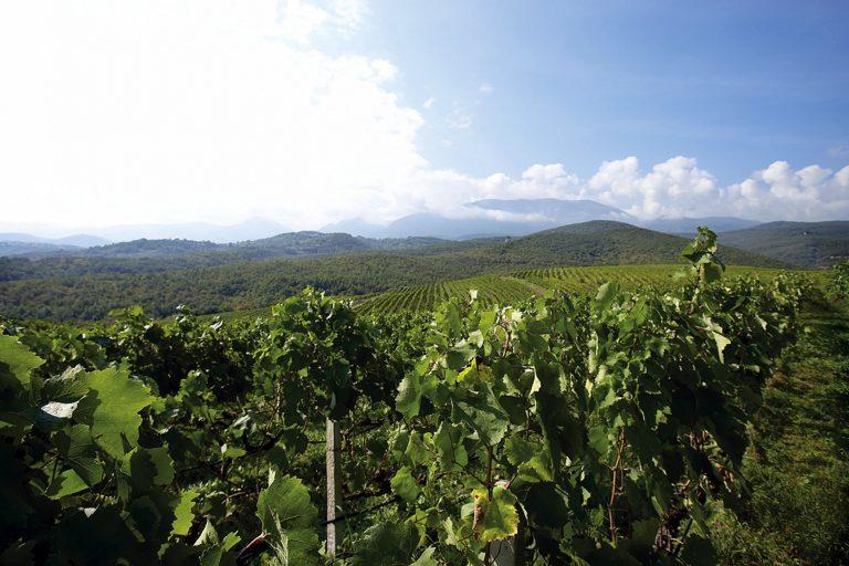 Ποιοί προτιμούν το σαμιώτικο κρασί και τα προβλήματα που υπάρχουν | Newsit.gr