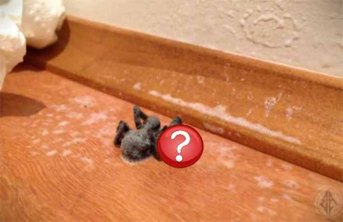 ΑΠΙΣΤΕΥΤΟ! Δεν θα πιστεύετε στα μάτια σας τι έφαγε η αράχνη! | Newsit.gr
