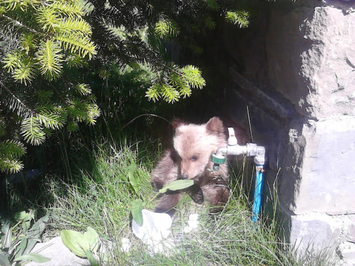 Βρήκαν αρκουδάκι στα Γρεβενά! – Φωτό   Newsit.gr
