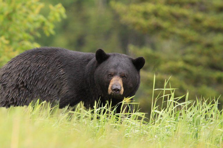Αρκούδα επιτέθηκε σε ζευγάρι μέσα στο σπίτι τους – Δείτε βίντεο   Newsit.gr