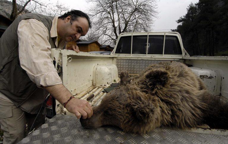 Τρίκαλα: Νεκρό αρκουδάκι σε τροχαίο | Newsit.gr