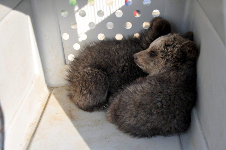 Ξάνθη: Θα επικηρυχθεί αυτός που σκότωσε το αρκουδάκι | Newsit.gr