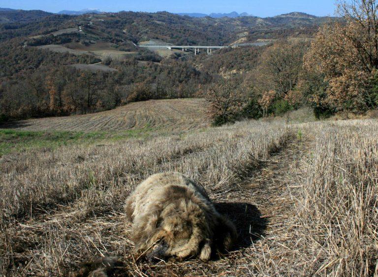 Σκότωσε αρκουδάκι και πήρε για λάφυρο το… αφτί του! | Newsit.gr