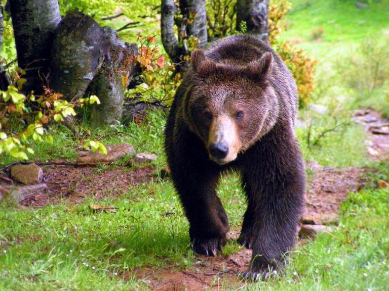 Το κρύο έστειλε για ύπνο τις αρκούδες στο Καταφύγιο Νυμφαίου | Newsit.gr