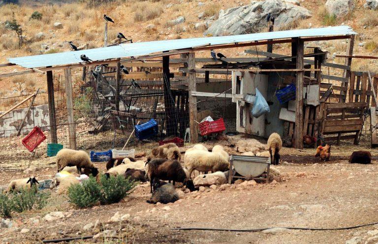 Μεσσηνία: Έκλεψαν εννιά αρνιά κι ένα κατσίκι!   Newsit.gr