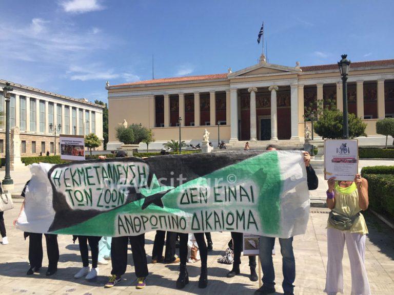 Τα αναρχικά «αγριογούρουνα» κατά της… σφαγής των αμνών [pics] | Newsit.gr