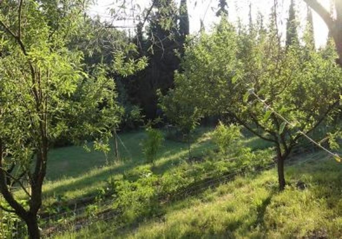 Εύβοια: Η αυλή με τα… ένοχα μυστικά τον έκανε πλούσιο – Φωτό!   Newsit.gr
