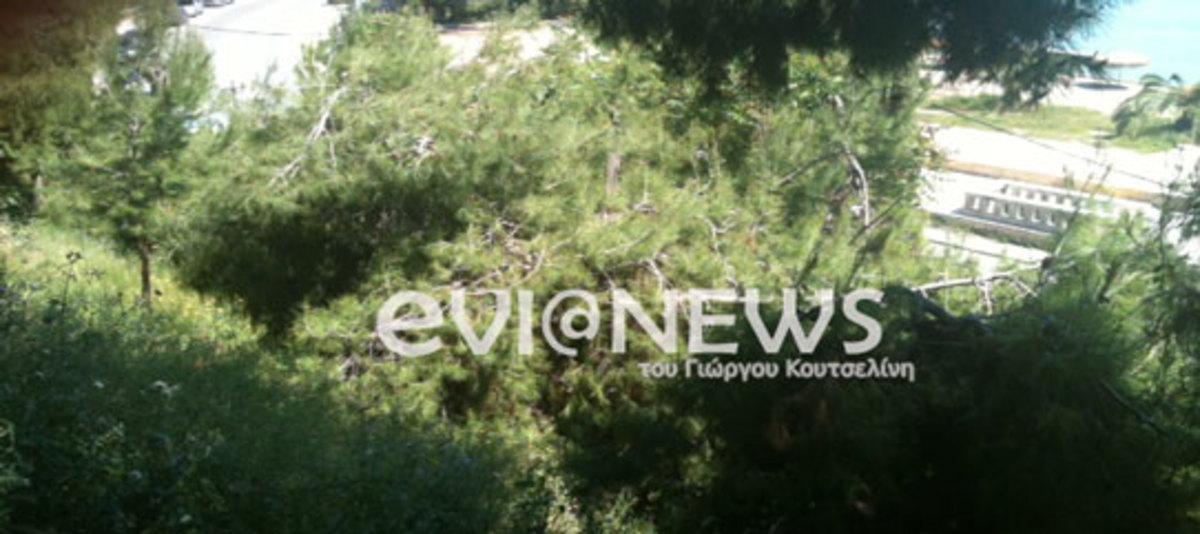Εύβοια:Συνεχίζεται το θρίλερ με τον άντρα που κρεμάστηκε σε πεύκο! | Newsit.gr