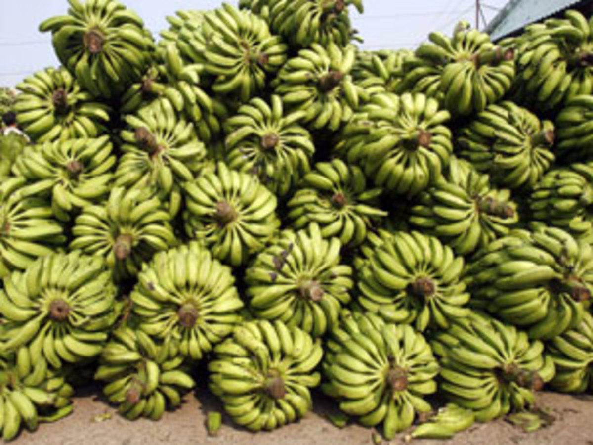 Εσώρουχα φτιαγμένα από μπανάνες! | Newsit.gr