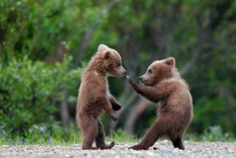 Ο μικρός Τζον, το ορφανό αρκουδάκι | Newsit.gr
