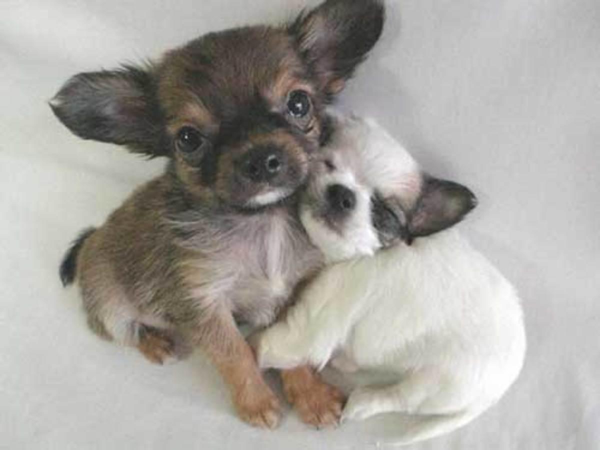 Παγκόσμια ημέρα κατά των πειραμάτων σε ζώα… | Newsit.gr