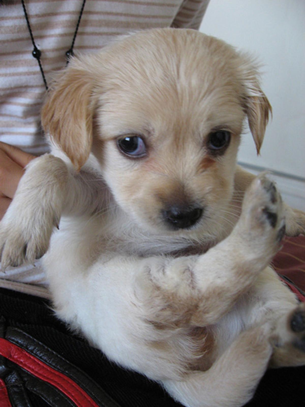 Tα σκυλιά μπορούν να μας «διαβάσουν»… | Newsit.gr