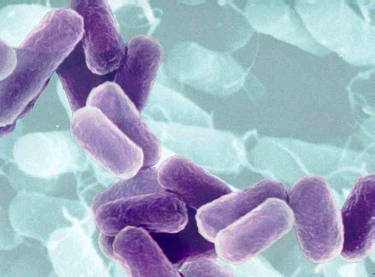 Νέα εκδοχή για την αιτία επιδημίας απο το E.coli   Newsit.gr