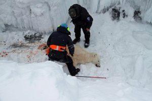 Πέθανε από βαθιά γεράματα ο πολικός αρκούδος «βεντέτα» στη Ρωσία