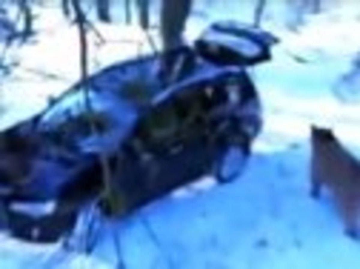 Απίστευτο video – Αρκούδα κλέβει τζιπ | Newsit.gr