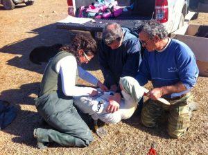 Δεν άντεξε το κρύο η Μπέλα! Νεκρός βρέθηκε ο αργυροπελεκάνος στο Δέλτα Αξιού