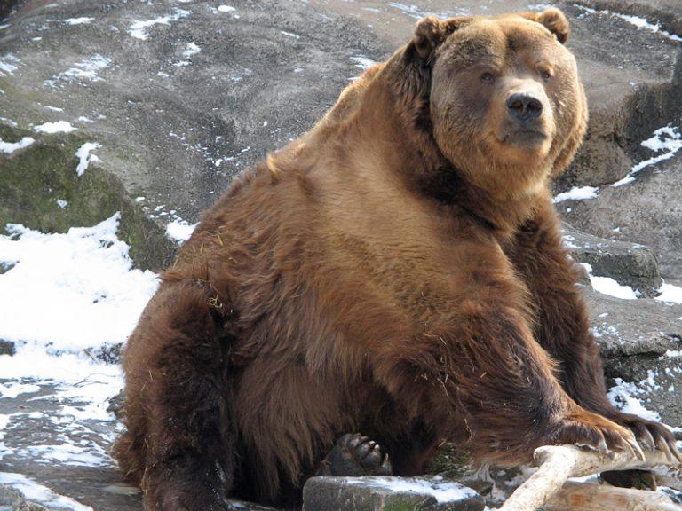 Οι αρκούδες στα δύσκολα…»βρίζουν» ! | Newsit.gr