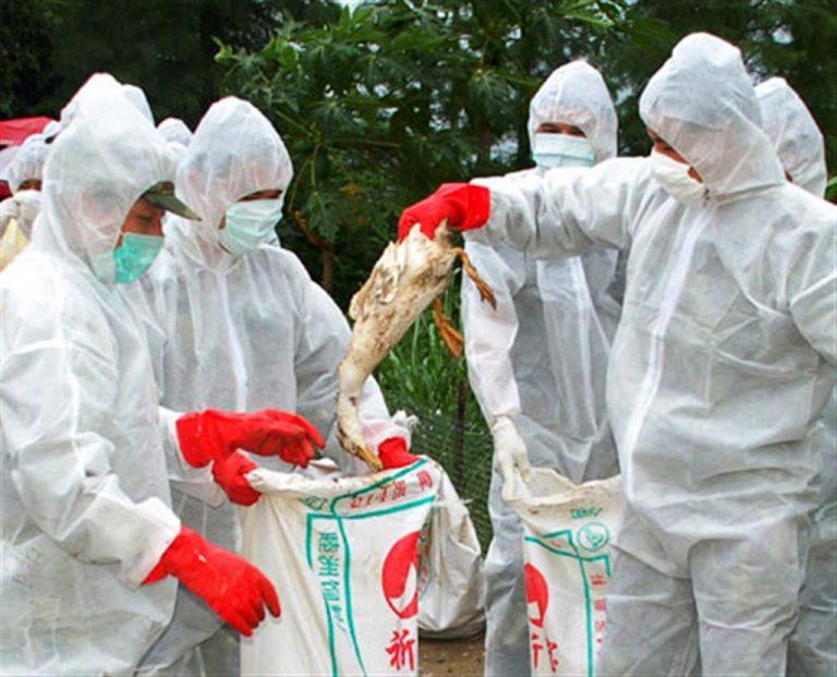 Ο εφιάλτης της γρίπης των πτηνών είναι πιο κοντά από όσο πιστεύουμε | Newsit.gr