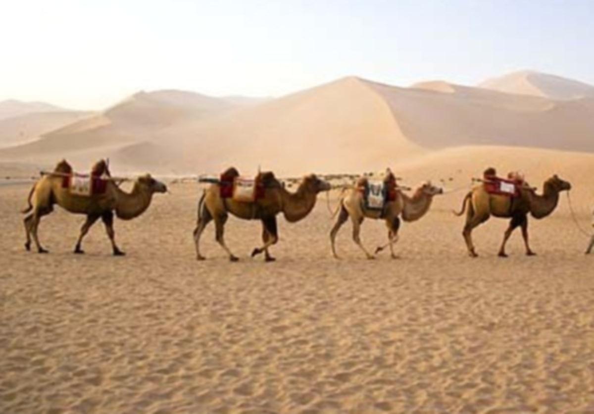 Οποιος βρεί τον Ομπάμα και την Κλίντον κερδίζει… καμήλες και κότες! | Newsit.gr