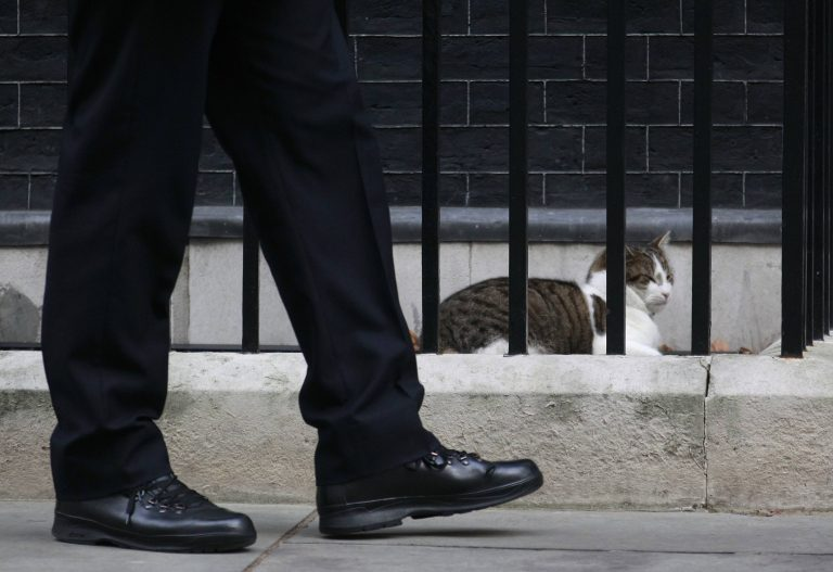 Η κυβέρνηση στήριξε τον Λάρι τον Πρώτο Γάτο της Βρετανίας | Newsit.gr