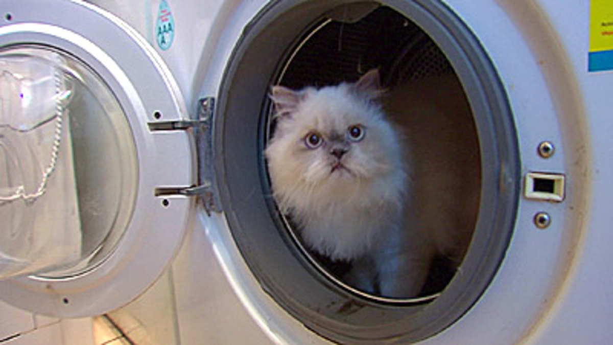 Το γατάκι που ήθελε να κάνει…. μπάνιο! | Newsit.gr
