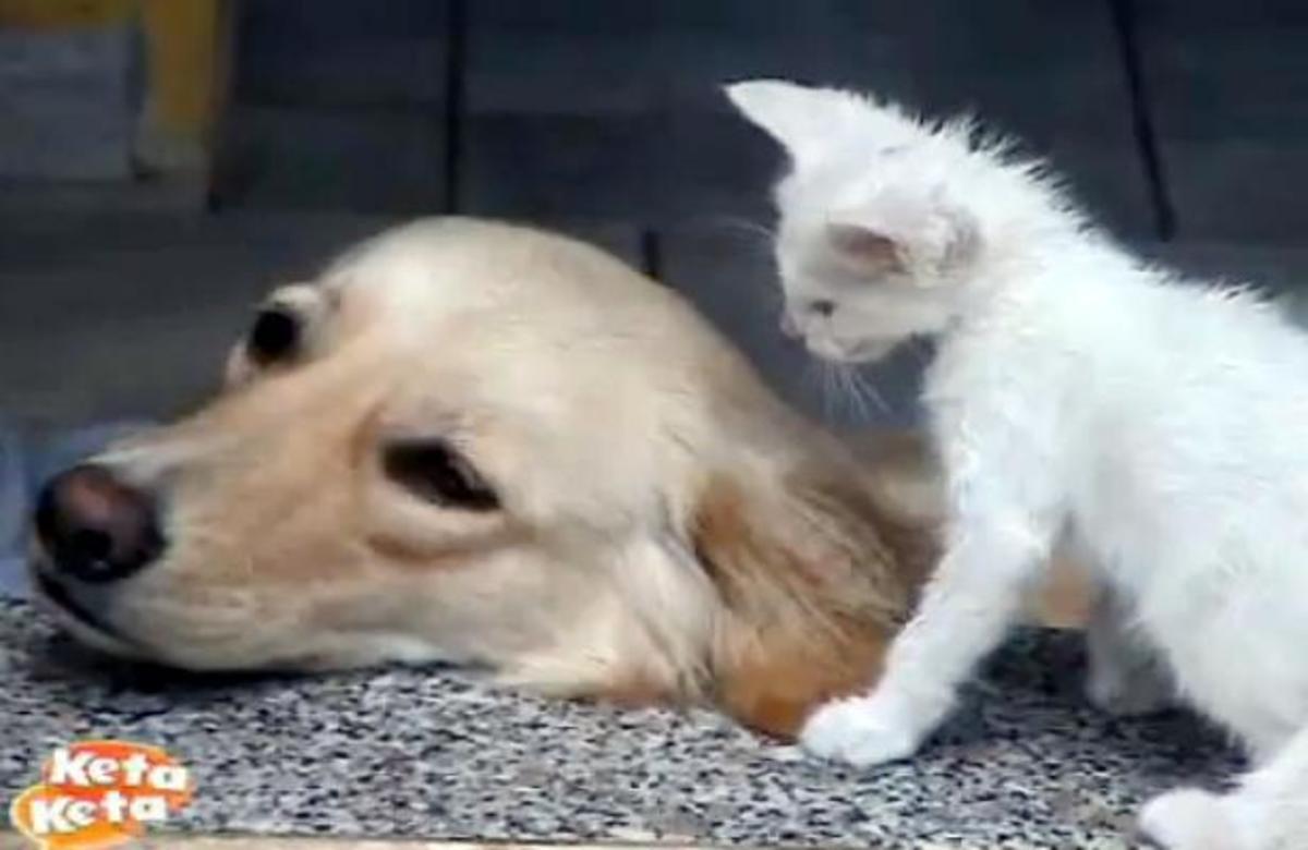 Aν μπορεί ο σκύλος με την γάτα, γιατί όχι και οι άνθρωποι…;   Newsit.gr