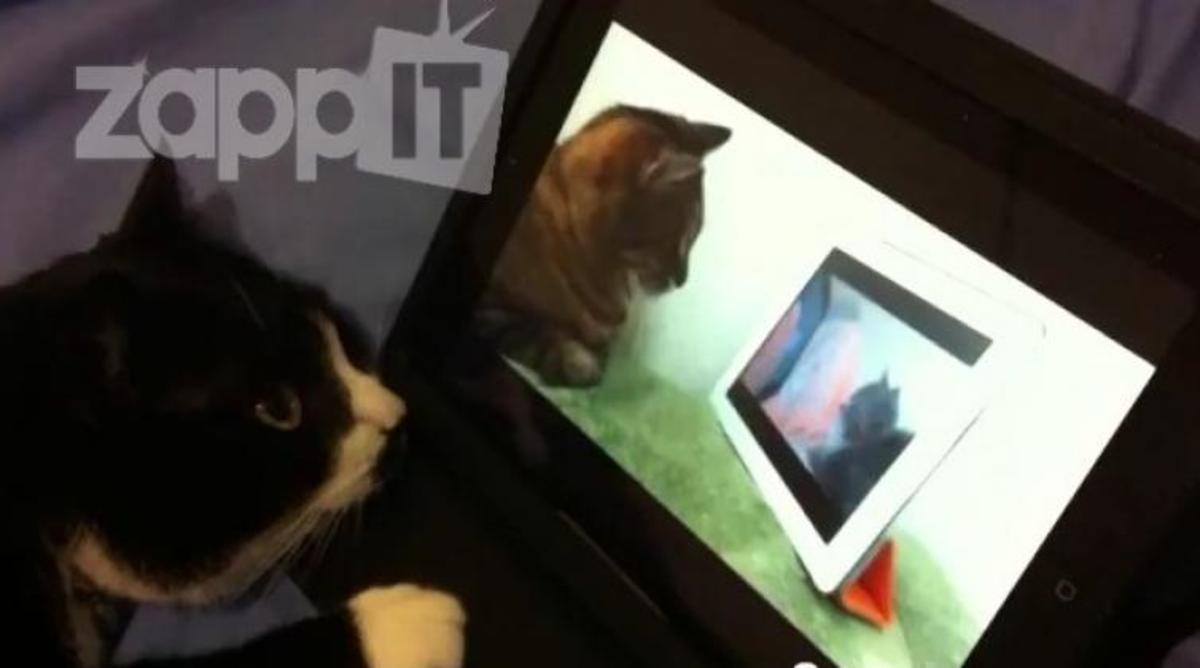 Γάτα βλέπει στο youtube μια γάτα που βλέπει μια άλλη γάτα! | Newsit.gr