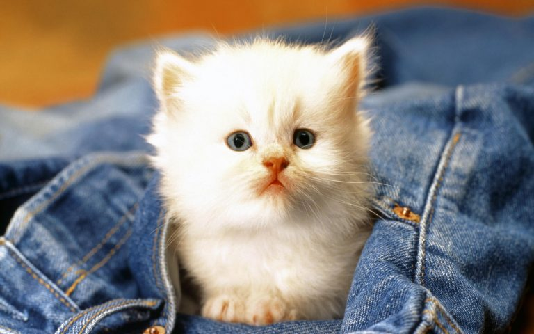 Γατάκι , πλύθηκε στο πρόγραμμα για τα μάλλινα και επέζησε… | Newsit.gr